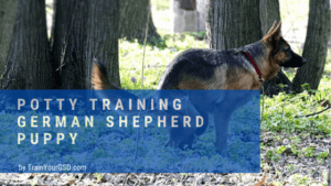 potty training a german shepherd puppy