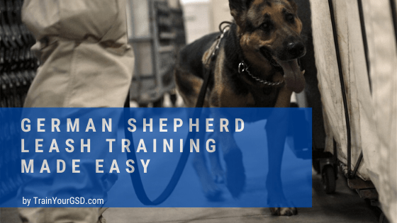 german shepherd leash training made easy