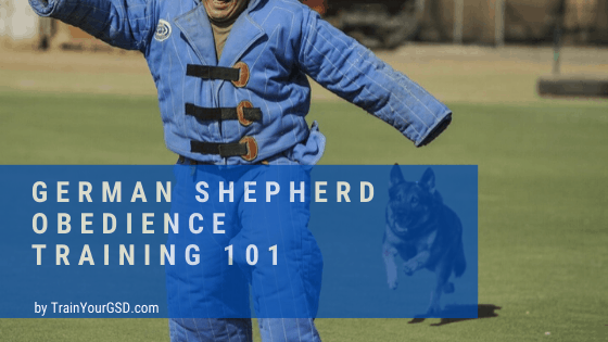 german shepherd obedience training 101