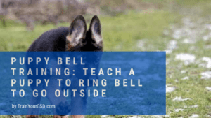 puppy bell training