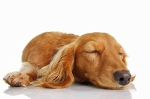 stress cause excessive shedding in dogs