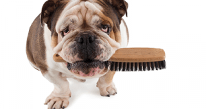 Dog Brush Review