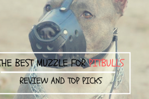The best muzzle for Pitbulls