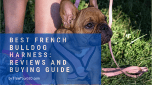 best french bulldog harness: reviews and buying guide