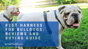 best harness for bulldogs