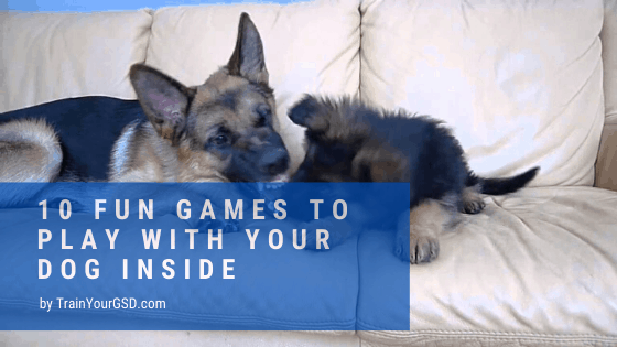 10 fun games to play with your dog inside