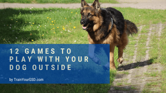 12 games to play with your dog outside
