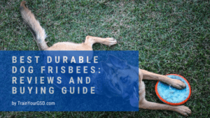 best durable dog frisbees