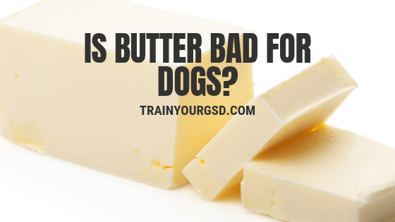 Is Butter Bad for Dogs?