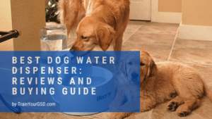 best dog water dispenser: reviews and buying guide