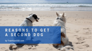 reasons to get a second dog