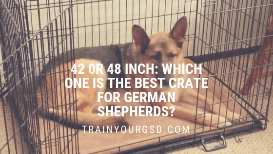 42 or 48 inch crate for German Shepherds