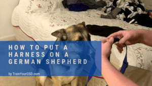 how to put a harness on a german shepherd