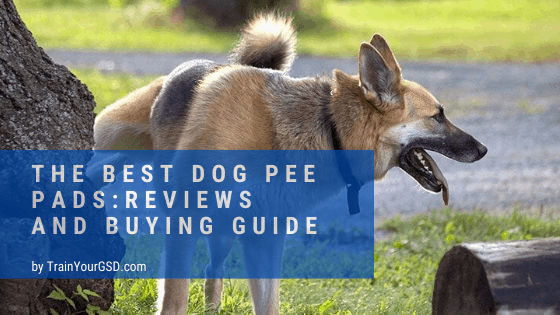 best dog pee pads: reviews and buying guide