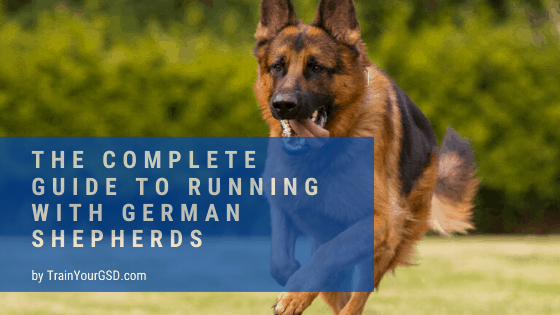 the complete guide to running with german shepherds