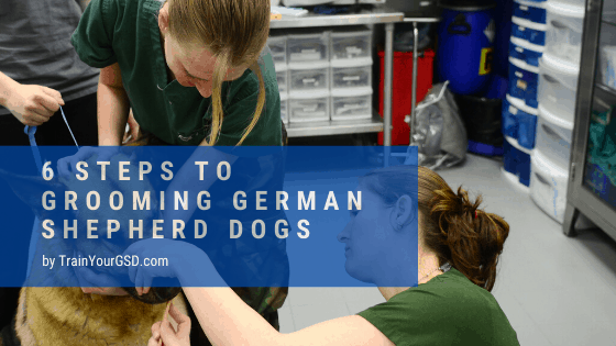 6 steps to grooming german shepherd dogs