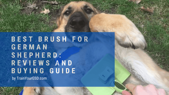 best brush for german shepherd: reviews and buying guide