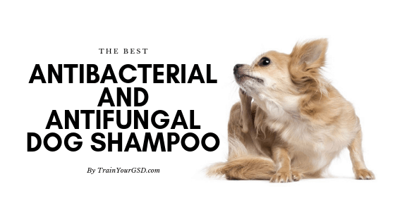 the best antibacterial and antifungal dog shampoo
