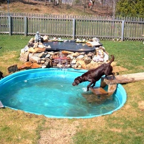 dog run with pool