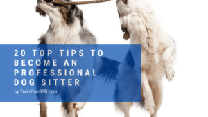 top 20 dog sitting tips