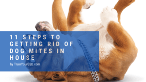 how to get rid of dog mites in house