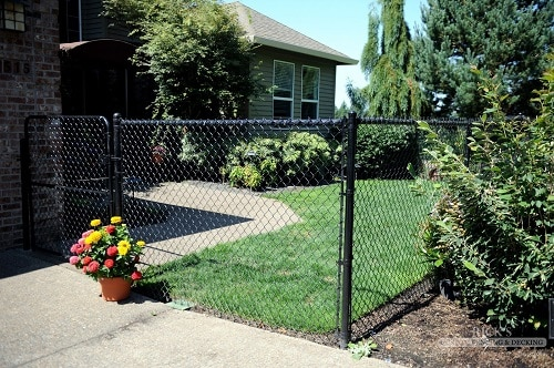 painted chain link fence dog run