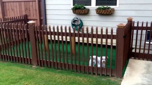 wood fencing dog run