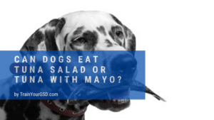 can dogs eat tuna salad or tuna with mayo?