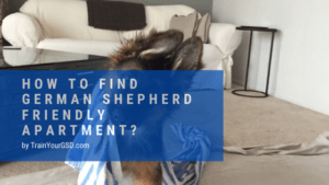 how to find german shepherd friendly apartment?