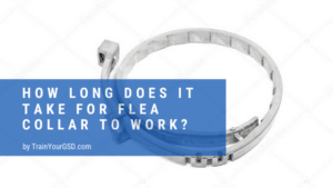 how long does it take for flea collar to work