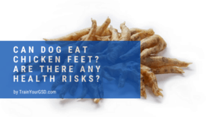 can dog eat chicken feet?