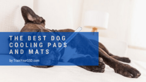 best dog cooling pads and mats