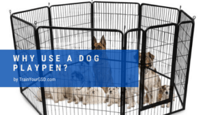 why use a dog playpen