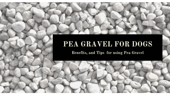 benefits and tips for using pea gravel for dogs
