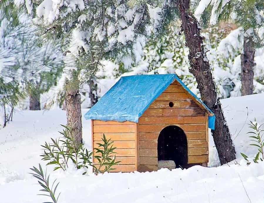 how to keep a dog house warm