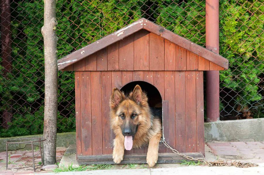 best dog houses for german shepherd