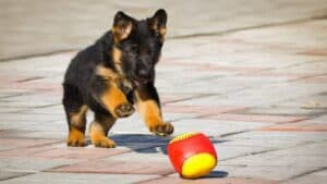 mind games for german shepherds