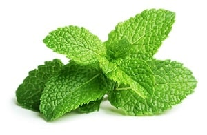 Dogs hate the smell of mint.