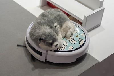 dog sleeping on robot vacuum.