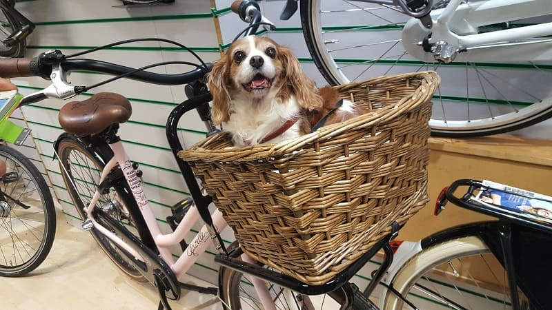 Small dog in brown wicker basket