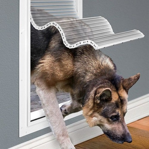 German shepherd passing through dog door.