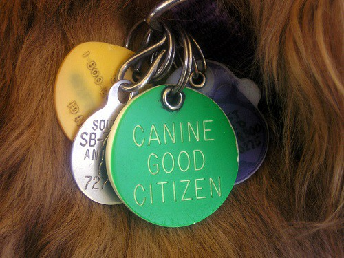 Dog wearing id tags