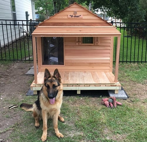 German shepherd in front of his house