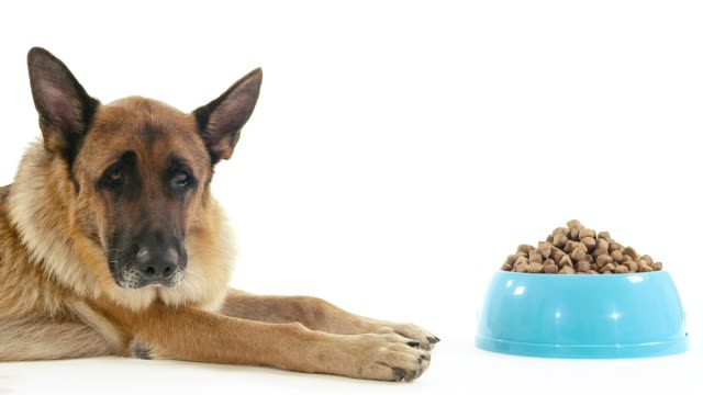 best dog bowls for German shepherds featured image