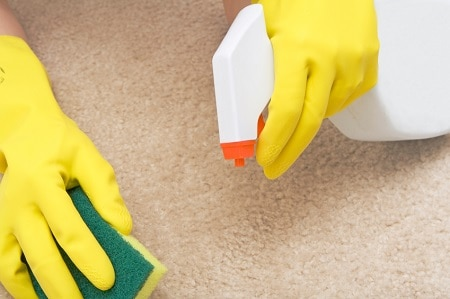 Removing pet stain and odor.