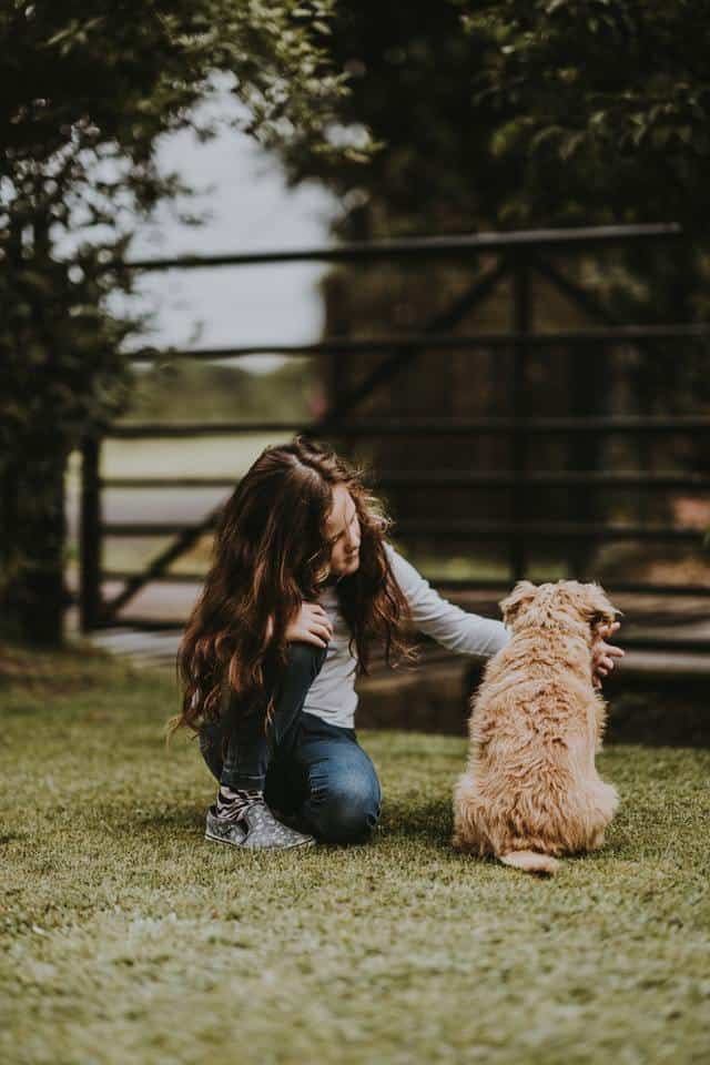 Child trying to pat a dog.