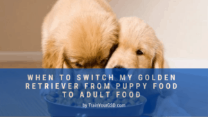 When to Switch from Puppy Food to Adult Food Golden Retrievers