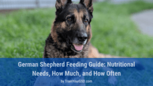 feeding German shepherd: how much and how often