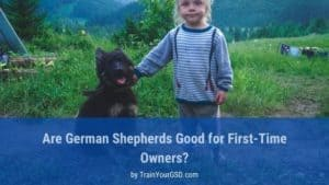 are german shepherds good for first time owners