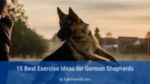 best exercise ideas for german shepherds